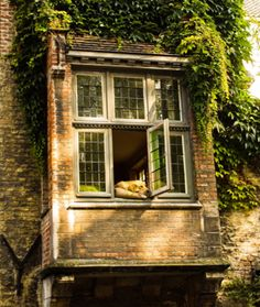 PROMPT: A sizzling hot summer day; an open window; an old brick home and a cat in the window. How are they all connected? Who lives there? Where is it?