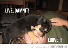 funny-dog-CPR-cute