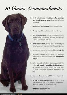 Ten Canine Commandments toadore