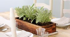 Jenny Steffens Hobick: Easy Summer Centerpiece | Planted Herbs