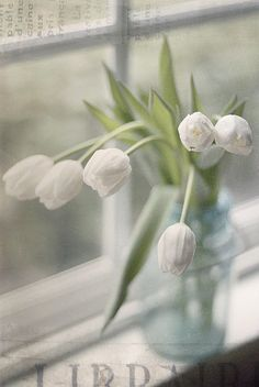 ~ 'tulips in the window'