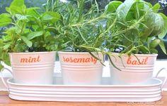 Simple Herb Garden - OPC The Better Half