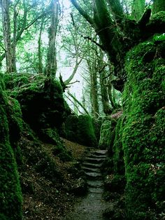 Puzzlewood Forest, said to be one of Tolkien's inspirations for Middle-Earth in The Lord of the Rings, Gloucestershire, England ..rh