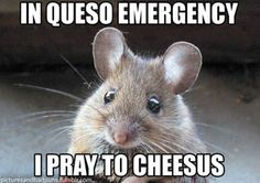 Spiritual mouse - In queso emergency, I pray to Cheesus