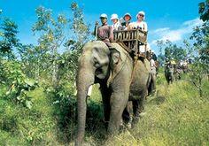 Go on an African safari