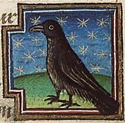 """Medieval Bestiary : Raven  (Museum Meermanno, Folio 34r)  """"Before the young have feathers, they feed on dew."""""""