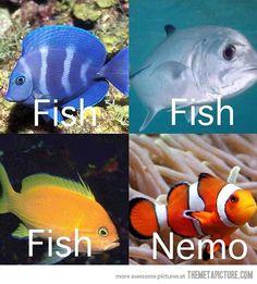 How I identify fish...