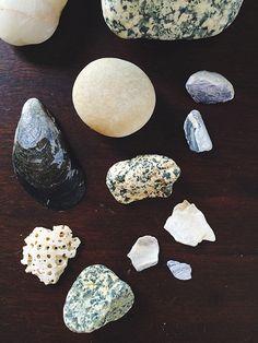 Cape Cod shells