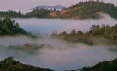 Outpost Wines, Howell Mountain AVA - You'll like the amazing views almost as much as their prized zinfandel.