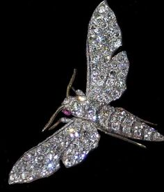 The Dutch royal family has a prodigious collection of jeweled insect brooches. royal families, luna moth, insect brooch, stone, moth brooch, jewel insect