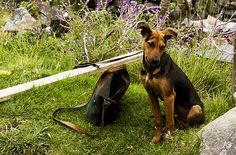 Vanidad canina by dalicarrascal, via Flickr