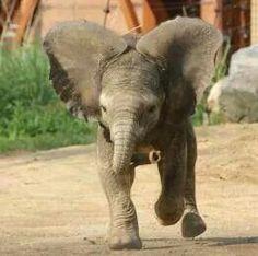 The Toledo Zoo - new baby elephant 2014