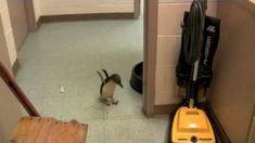Cookie the Little Penguin at the Cincinnati Zoo