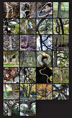 Tree Typographic typology.