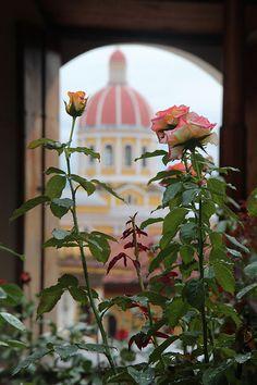 Roses Of Nicaragua