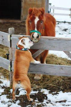 Dis is my pony friend