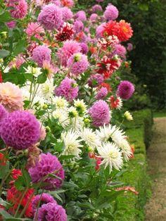 Rousham Park House & Dahlia Garden - Oxfordshire, England