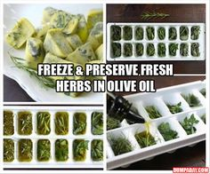 a Freeze & Preserve Fresh Herbs in Olive Oil