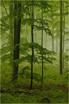 Deep in the forest by Ingrid Lamour on Fivehundredpx