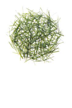 grass clippings (mary jo hoffman)