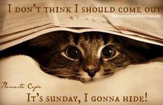Sunday hiding cat quote via Namaste Cafe at www.Facebook.com/NamasteDharmaCafe