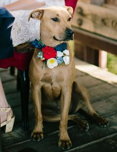 pup with flower collar