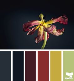 Gorgeous, sophisticated, warm palette, wonderful for a high Legacy or Security Value. fading flora via Design-Seeds | commentary via The Voice Bureau at AbbyKerr.com #VoiceValues