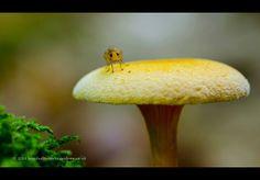 Het vliegje en de paddenstoel. Door communitylid meneerlex - NG FotoCommunity ©