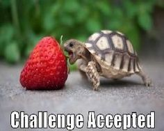 How Much Can You Eat? Funny Turtle vs Strawberry ◬