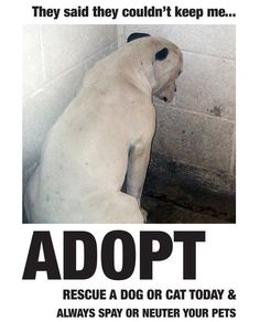 Adopt!!!!! Spay & Neuter!!!!!! Breeders contribute to over population in our shelters! There are thousands of dogs in shelters that can love you just as much as one you can get from a breeder. The difference? Shelter dogs are on short lived time. Save a life. Adopt.