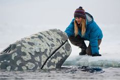 Big miracle!  Whale