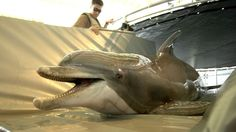 Mississippi man fined for shooting dolphin