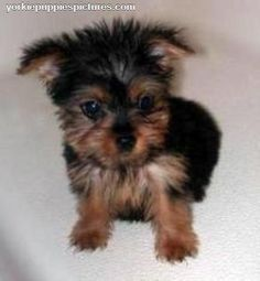 cute puppies | Cute Puppy Pictures