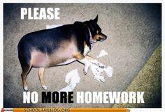 dog ate, dogs, homework xd, giggl, funni, homework funny, humor, homework excus, homework suck