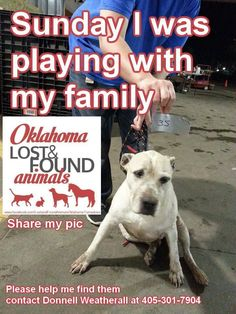 Please share to help this animal find his family! This animal was displaced from the Tornadoes in Oklahoma