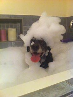 Dog in a tub