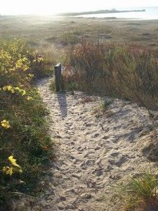 Sandy Hook Nature Trail is a two-mile hike through the Tawas Point State Park grounds in Northeastern Michigan.