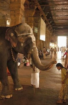 India elephant. riding one would definitely be on my bucket list