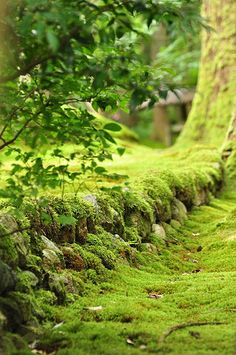 """[And when thou art weary, I'll find thee a bed of mosses and flowers to pillow thy head..."""" -John Keats]"""