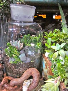 container gardening at the NW Flower & Garden show 2011