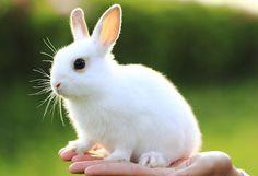 White bunny!