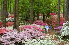 Callaway Gardens, Pine Mountain, GA