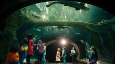 Location 9: California Academy of Sciences Museum, Golden Gate Park, San Francisco - Visit California