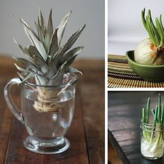 How to Regrow Vegetables