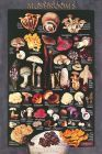 Cultivated Mushrooms Poster X4