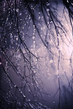 That is a beautiful photograph. Rain is such a beautiful photography subject.