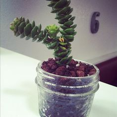 Succulent Obsessed on Bonnin Designs Blog