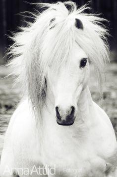 Gorgeous white stallion