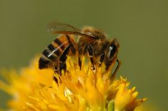 Top 30 Flowers For Bees (Plant some of these - we need to help the little guys out!!)