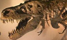 size dinosaur, skeletons, denver museum